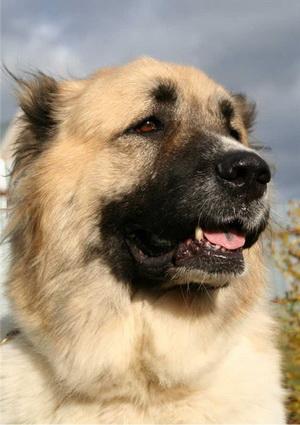 Фильмы о рабочих и бойцовских  собаках