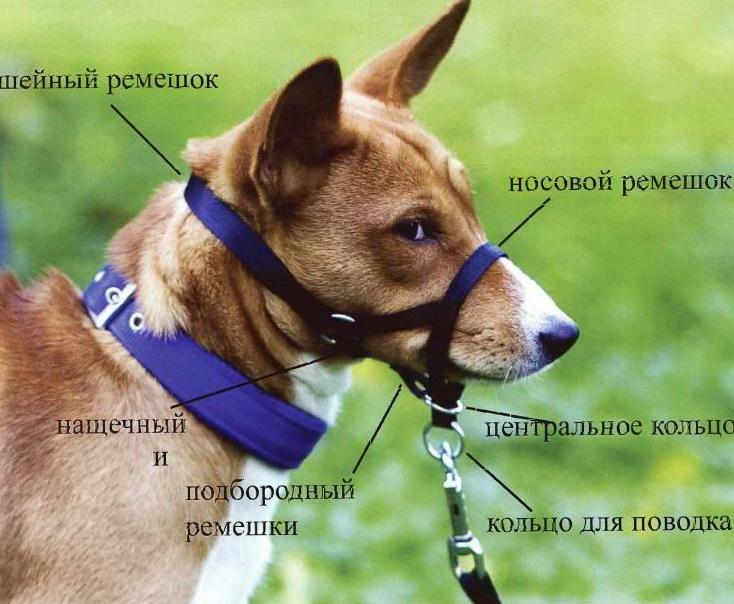 Как сшить намордник для собаки своими руками