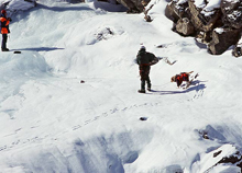 Лавинные и спасательные собаки