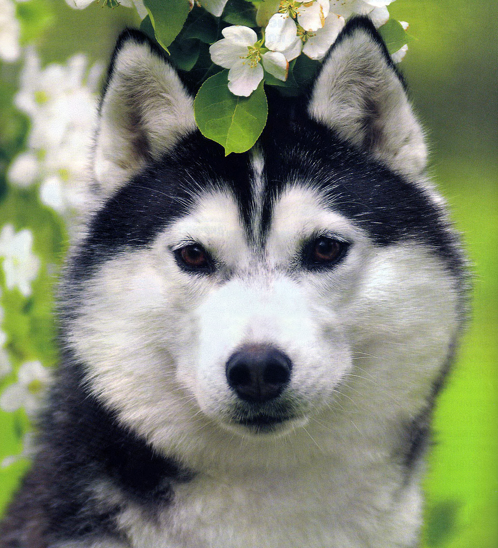 Фото волка дикого